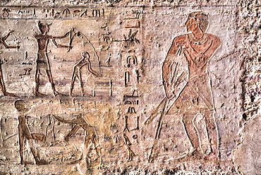 Reliefs, Tomb of Mekhu and Sabni, Tombs of the Nobles, Aswan, Egypt, North Africa, Africa