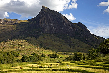 Local villagers working in the fields, Tsaranoro Massif, southern Madagascar, Africa