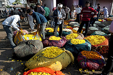 Men buying yellow marigolds, weighed and bagged in cotton cloth bundles, in the early morning flower market, Jaipur, Rajasthan, India, Asia