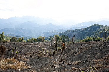 Desecration across beautiful Naga hills from the government slash and burn system, to improve land for cultivation, Nagaland, India, Asia