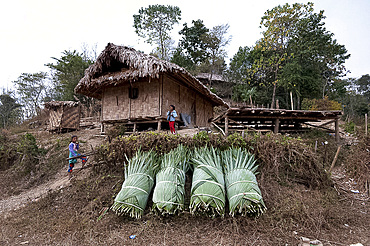 Two Naga girls playing near fan palm leaves, bundled together, ready for use in reroofing their village house, Nagaland, India, Asia