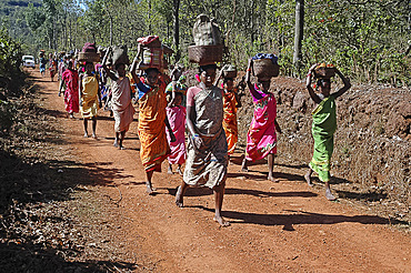 Group of Didai tribeswomen walking from their village to the local market, Onukudelli, Orissa, India, Asia