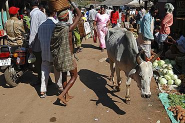 Bonda tribeswoman and passing cow at local tribal market, Onukudelli, Orissa, India, Asia