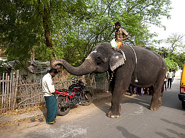 Temple elephant pausing to bless a man in the street with its trunk, Tranquebar, Tamil Nadu, India, Asia
