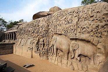 Beautiful 7th century bas relief carved Arjuna's Penance rock, Mahaballipuram, UNESCO World Heritage Site, Tamil Nadu, India, Asia
