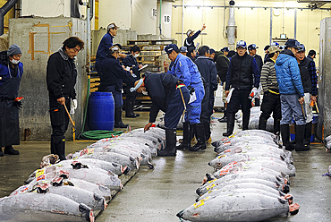 Restaurateurs and sushi makers at the Tuna fish auction in the early morning market of Tsukiji Shijo (market), Tsukiji, Tokyo, Japan, Asia