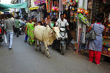 Busy shopping street in the market, with sacred cow, Mandvi, Gujarat, India, Asia