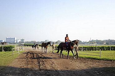 Race horses being exercised at the famous Royal Calcutta Turf Club, built in 1820, Kolkata, West Bengal, India, Asia