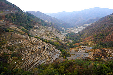 Terraced rice paddy lining the sloping hillsides in the Naga hills, Kezoma district, Nagaland, India, Asia
