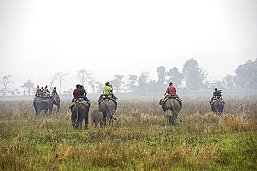 Tourists riding on elephant back, with two fifteen month old elephant calves following their mothers, dawn, Kaziranga National Park, Assam, India, Asia