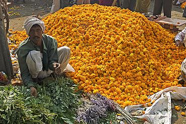 Man selling marigolds, flower market, Bari Chaupar, Jaipur, Rajasthan, India, Asia