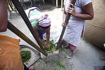 Assamese tribal village women, mother and daughters, crushing herb leaves in domestic stone mill, Majuli Island, Assam, India, Asia
