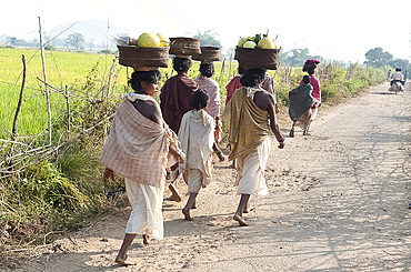 Dunguria Kondh tribeswomen walking barefoot to tribal market carrying baskets of produce on their heads, Bissam Cuttack, Orissa, India, Asia