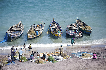Everybody joins in as the morning's catch of fish is unloaded, Dhanushkodi, Tamil Nadu, India, Asia
