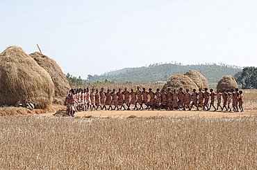 Tribal dancing by village women celebrating the rice harvest, rural Orissa, India, Asia