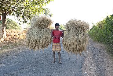 Man carrying bundles of rice straw balanced on wooden pole along rural road near Rayagada, Orissa, India, Asia