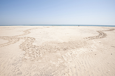 Circular path made by turtle coming up to lay eggs in the sand and returning to the sea, coastal Odisha, Orissa, India, Asia