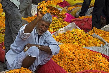 Man offering marigolds for sale, flower market, Bari Chaupar, Jaipur, Rajasthan, India, Asia