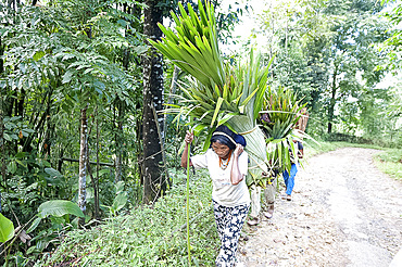 Naga tribeswomen carrying loads of fan palm leaves for domestic thatch, on traditional headbands, rural Nagaland, India, Asia