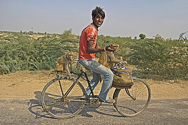 Young man cycling with two monkeys, Tonk district, Rajasthan, India, Asia