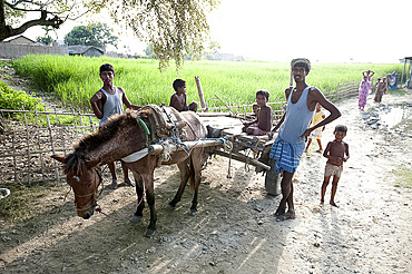 Children and men round donkey cart beside village rice paddy, Bogerpar district, Assam, India, Asia