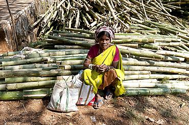 Mali tribeswoman sitting on piles of sugar cane in Mali weekly tribal market, Guneipada, Koraput district, Orissa (Odisha), India, Asia