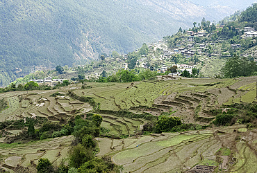 Terraced ricefields near Kuruthang, on the Puna Tsang Chu valley beside the road from Thimpu to Punakha, Bhutan, Asia