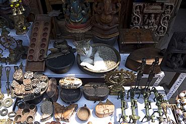 Cat in antique shop window, Mattancherry, Kochi, Kerala, India, Asia