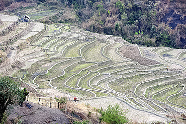 Two women working, digging over terraced rice paddy fields after rice harvest, Ukhrul district, Manipur, India, Asia