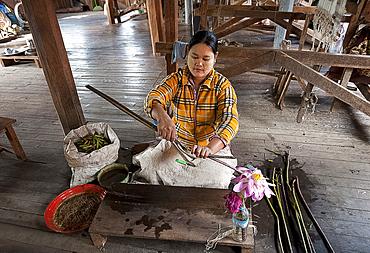 Woman pulling lotus strands from lotus stems, to be spun into thread, Ko Than hlaing Weaving, Inpawkhan, Inle Lake, Shan state, Myanmar (Burma), Asia