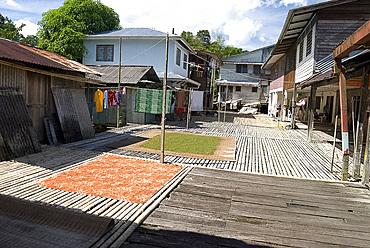 Washing and green peppercorns drying at Annah Rais Bidayuh Longhouse, Sarawak, Malaysian Borneo, Malaysia, Southeast Asia, Asia