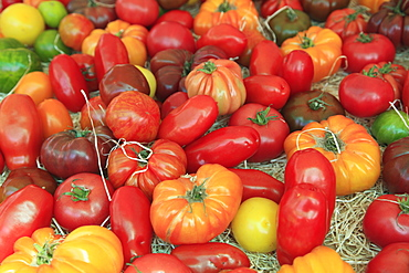 Tomatoes in the market, Cours Saleya, Old Town, Nice, Alpes Maritimes, Provence, Cote d'Azur, French Riviera, France, Europe