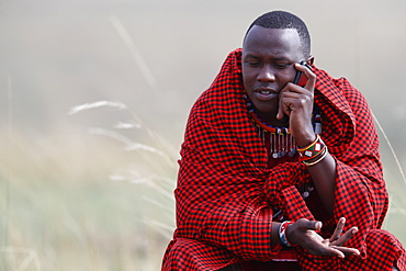 A Masai man talking on a mobile phone in the African savanna, Masai Mara Game Reserve. Kenya, East Africa, Africa