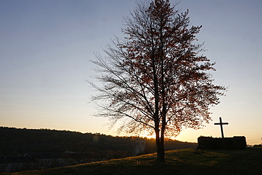 Tree and cross at dusk at Le Bec Hellouin, Eure, Normandy, France, Europe