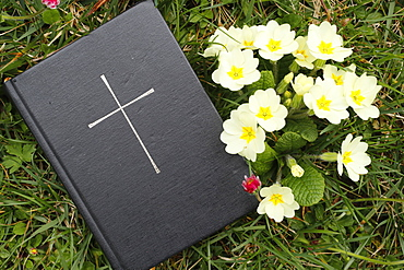 Bible on the grass with primrose at springtime, France, Europe