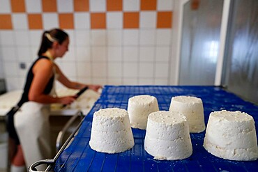Goat cheese factory on traditional farm in the French Alps, Haute-Savoie, France, Europe