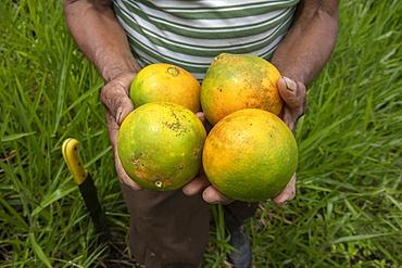 Farmer offering oranges in Intag valley, Ecuador