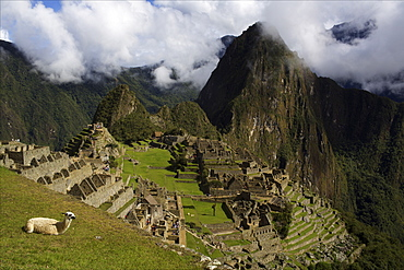 View over Machu Picchu, UNESCO World Heritage Site,  Sacred Valley, Peru, South America