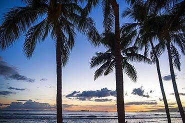 Palm trees on Waikiki Beach, Oahu, Hawaii, United States of America, Pacific