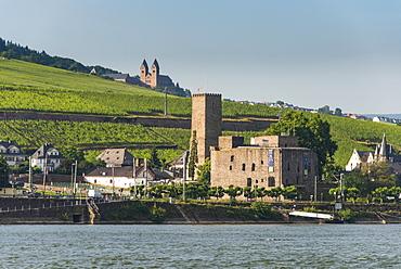 View over the Bruemserburg in Ruedesheim on the River Rhine, Rhine Gorge, UNESCO World Heritage Site, Hesse, Germany, Europe
