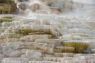 Travertine terraces in Mammoth hot springs terraces, Yellowstone National Park, UNESCO World Heritage Site, Wyoming, United States of America, North America
