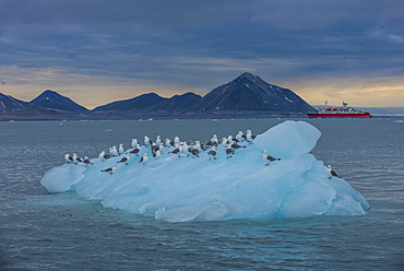 Kittiwakes sitting on a huge piece of glacier ice with an expedition boat in the background, Hornsund, Svalbard, Arctic, Norway, Scandinavia, Europe