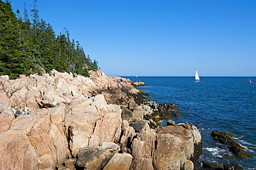 Sailing boat at the rocky cliffs of Bass Harbor Head Lighthouse, Acadia National Park, Maine, New England, United States of America, North America