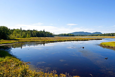 Little creek in the Acadia National Park, Maine, New England, United States of America, North America