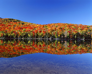 Reflection of autumn colors in lake, Heart Lake, Adirondack State Park, New York State, United States of America, North America