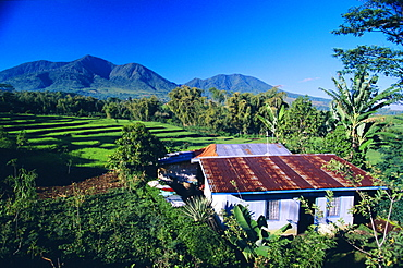 House amidst the rice terraces in the rice and coffee growing heart of western Flores, Ruteng, Flores, Indonesia