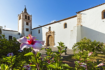 Hibiscus flowers and the 17th century Santa Maria Cathedral in this historic former capital, Betancuria, Fuerteventura, Canary Islands, Spain, Europe