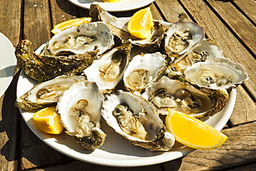 Oysters (huitres) ready to eat, thousands of tons of the shellfish are grown annually here, Ile de Re, Charente-Maritime, France, Europe