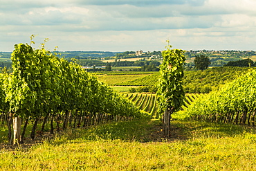 View northeast across vineyards towards Duras and its chateau at this village near Monsegum, Le Faubourg, Gironde, Aquitaine, France, Europe