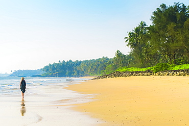 Lone traveller on lovely palm-fringed Kizhunna Beach, south of Kannur on Kerala's north coast, Kizhunna, Kannur, Kerala, India, Asia